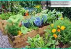 Grants dārzs ar savām rokām - kā jūs varat izmantot granti dārzā