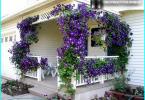 Skujkoki par Gardens: Dārza dizains ar skujkoku
