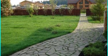 Kā padarīt jūsu pašu rokās Topiary: soli pa solim instrukcijas, lai strādātu