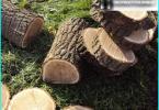 Lawn Care: ķemmēšana, vēdināšana, mēslošana, mulčēšana, pļaušana