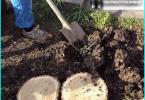 Veidi egles: labākās dekoratīvo šķirņu audzēšanai dārzā