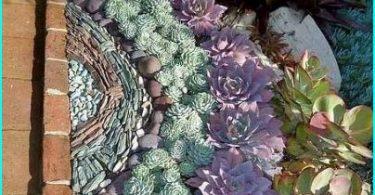 Akmens Rose (jaunieši), kā dekoratīvs dārza elements: stādīšanas un kopšanas