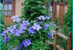 Kā izvēlēties dārza smalcinātājs - kuriem viens ir labāks un kāpēc?