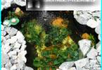 Vaislas zivis mākslīgiem dīķiem - īpašības un nianses