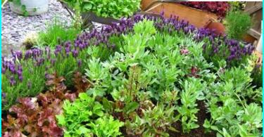 Kā veikt dārzs pudeli: meistarklasi par ierīces florariuma